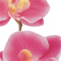 Pink Orchid Studio