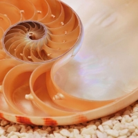 Sea Shell Apt.